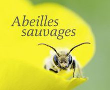 couverture_abeilles_sauvages philippe boyer
