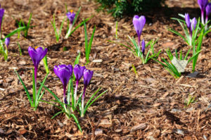 mulch-permaculture
